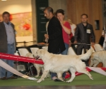 worlddogshowchampionnatdefrance_2011_img_6981