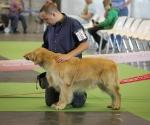 worlddogshowchampionnatdefrance_2011_img_7060