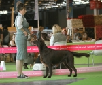 worlddogshowchampionnatdefrance_2011_img_7094