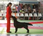 worlddogshowchampionnatdefrance_2011_img_7102