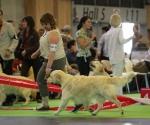 worlddogshowchampionnatdefrance_2011_img_7173