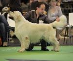 worlddogshowchampionnatdefrance_2011_img_7235