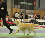 worlddogshowchampionnatdefrance_2011_img_7258