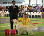 worlddogshowchampionnatdefrance_2011_img_7546