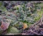 gamta_urb_saltis_IMG_1866