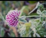 gamta_urb_saltis_IMG_1870