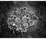 gamta_urb_saltis_IMG_1878