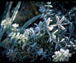 gamta_urb_saltis_IMG_2007