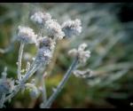 gamta_urb_saltis_IMG_2012