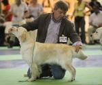 worlddogshowchampionnatdefrance_2011_img_7748