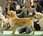 worlddogshowchampionnatdefrance_2011_img_8247