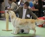 worlddogshowchampionnatdefrance_2011_img_8280