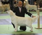 worlddogshowchampionnatdefrance_2011_img_8285