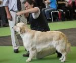 worlddogshowchampionnatdefrance_2011_img_8334