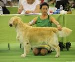 worlddogshowchampionnatdefrance_2011_img_8444